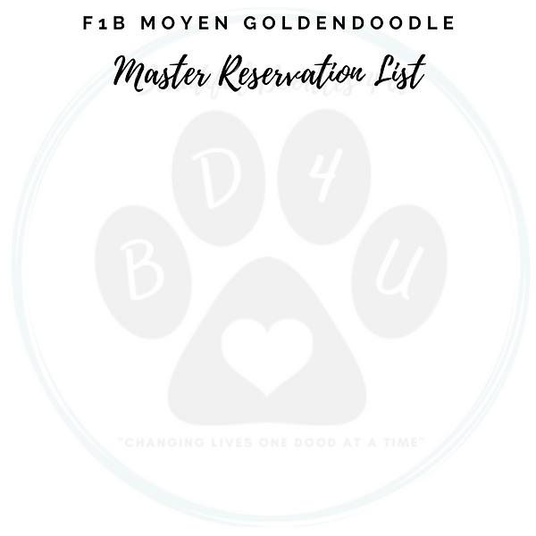 F1B Moyen Goldendoodle Master Reservatio