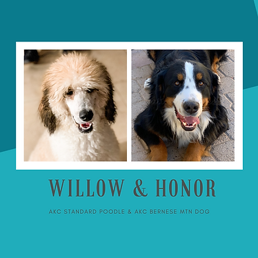 WILLOW & HONOR.png
