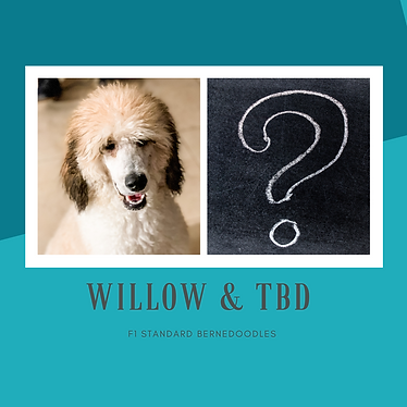 Willow & TBD.png