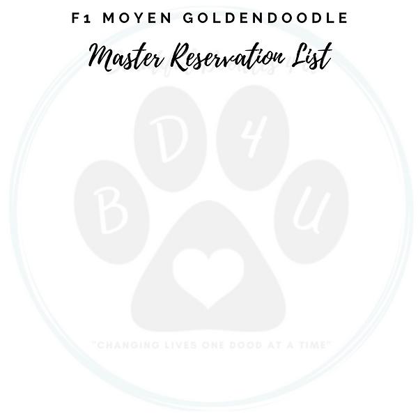 F1 Moyen Goldendoodle Master Reservation