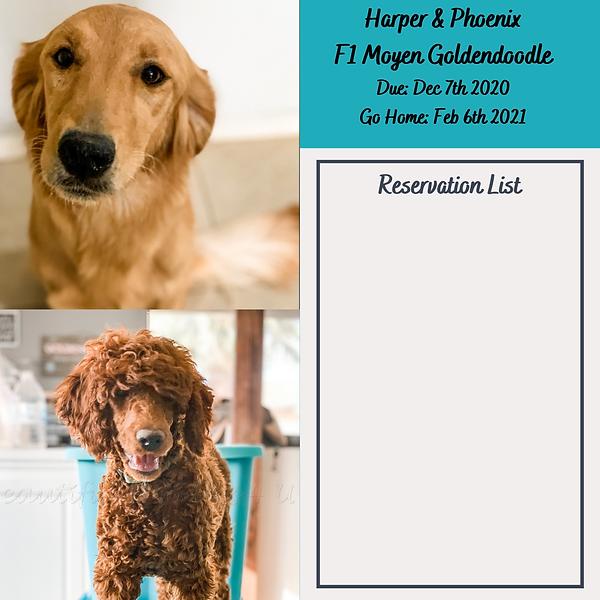 Harper & Phoenix Dec 2020 Reservation Li