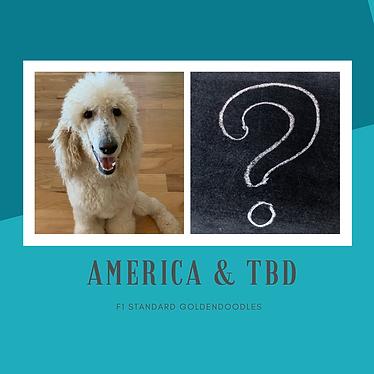 AMERICA & TBD.png
