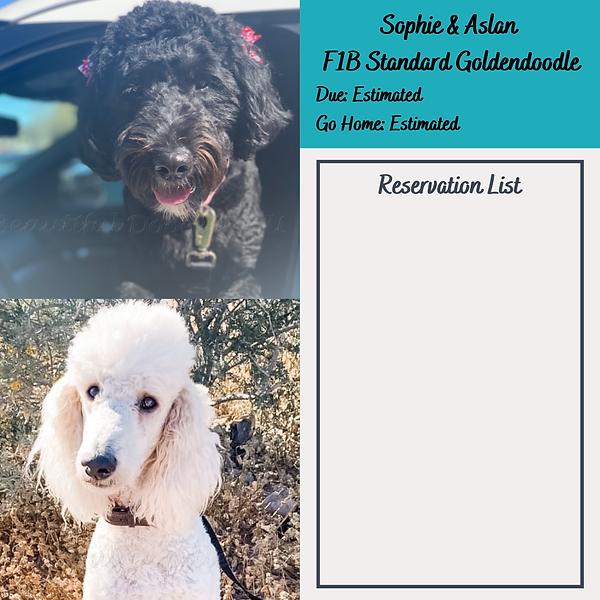 Sophie Aslan Reservation List.png