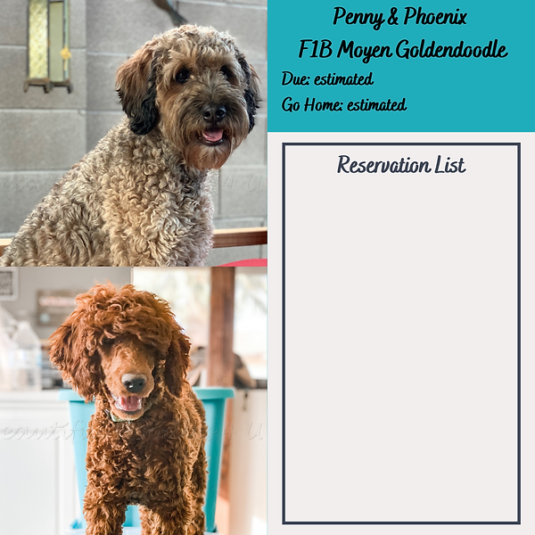 Penny & Phoenix Reservation List.png
