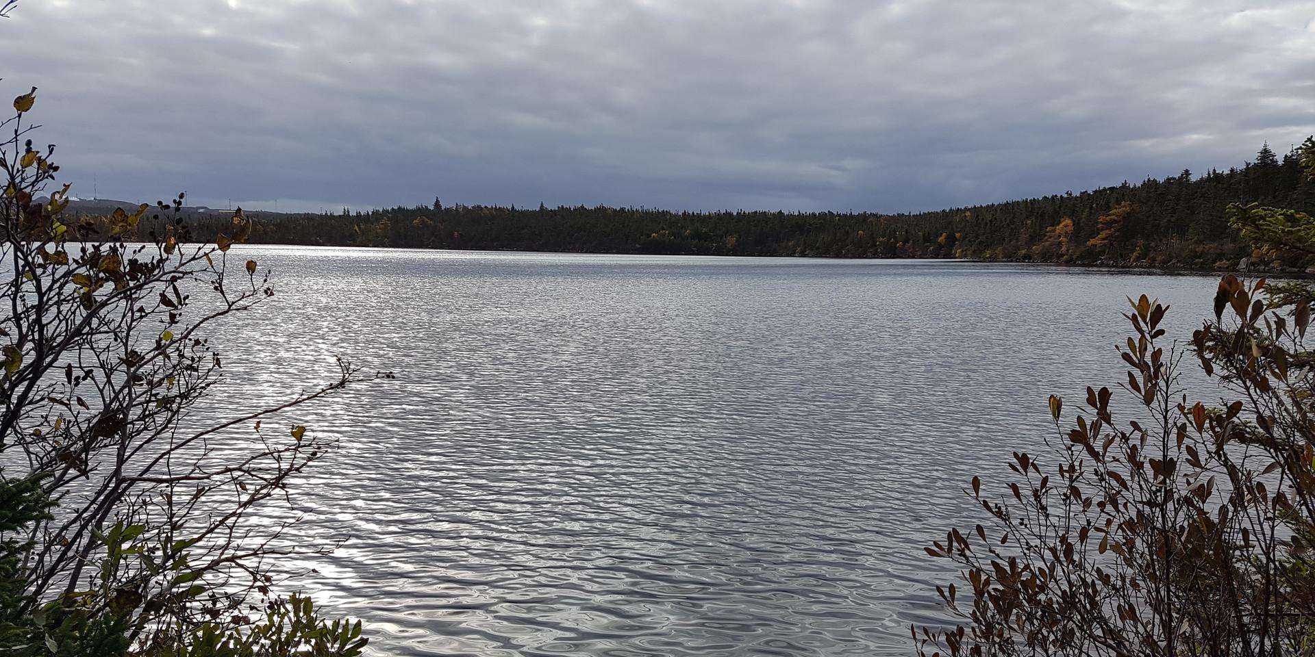 Octagon Pond (5 min walk)