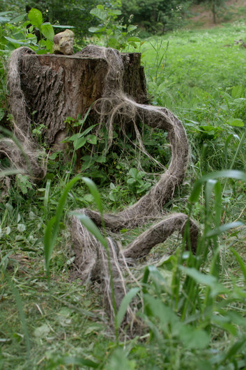 creature coming from treetrunk.jpg