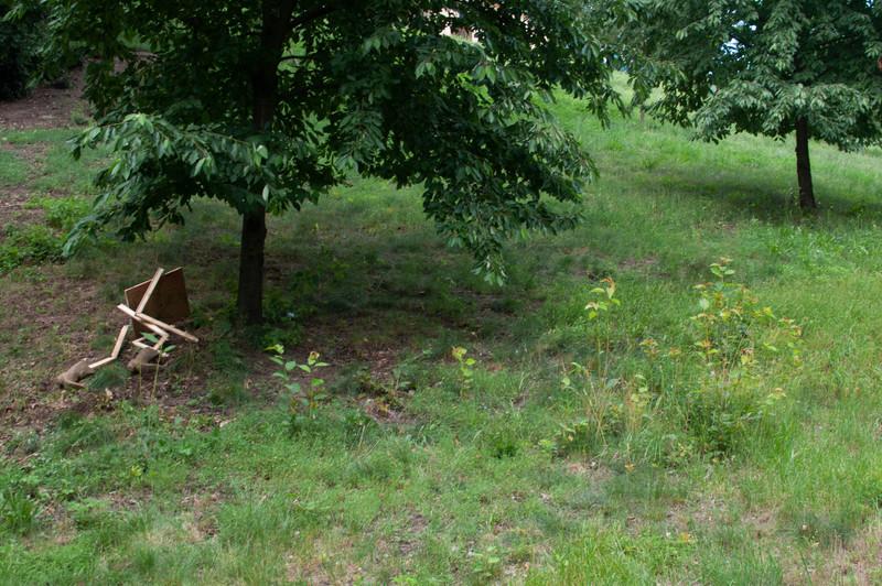 pear in landscape.jpg