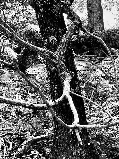 Woods summer 2021.jpg