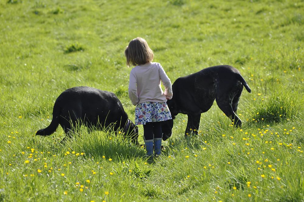child and dogs in field
