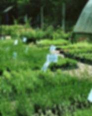 nursery_image_1.jpg
