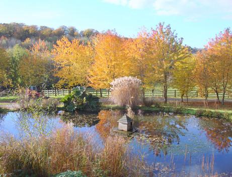 Gorgeous Autumn garden