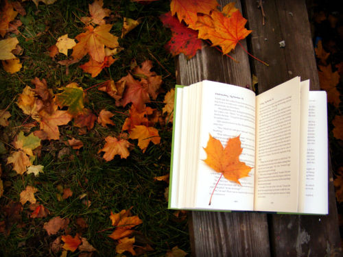 Books To Curl Up With This Fall