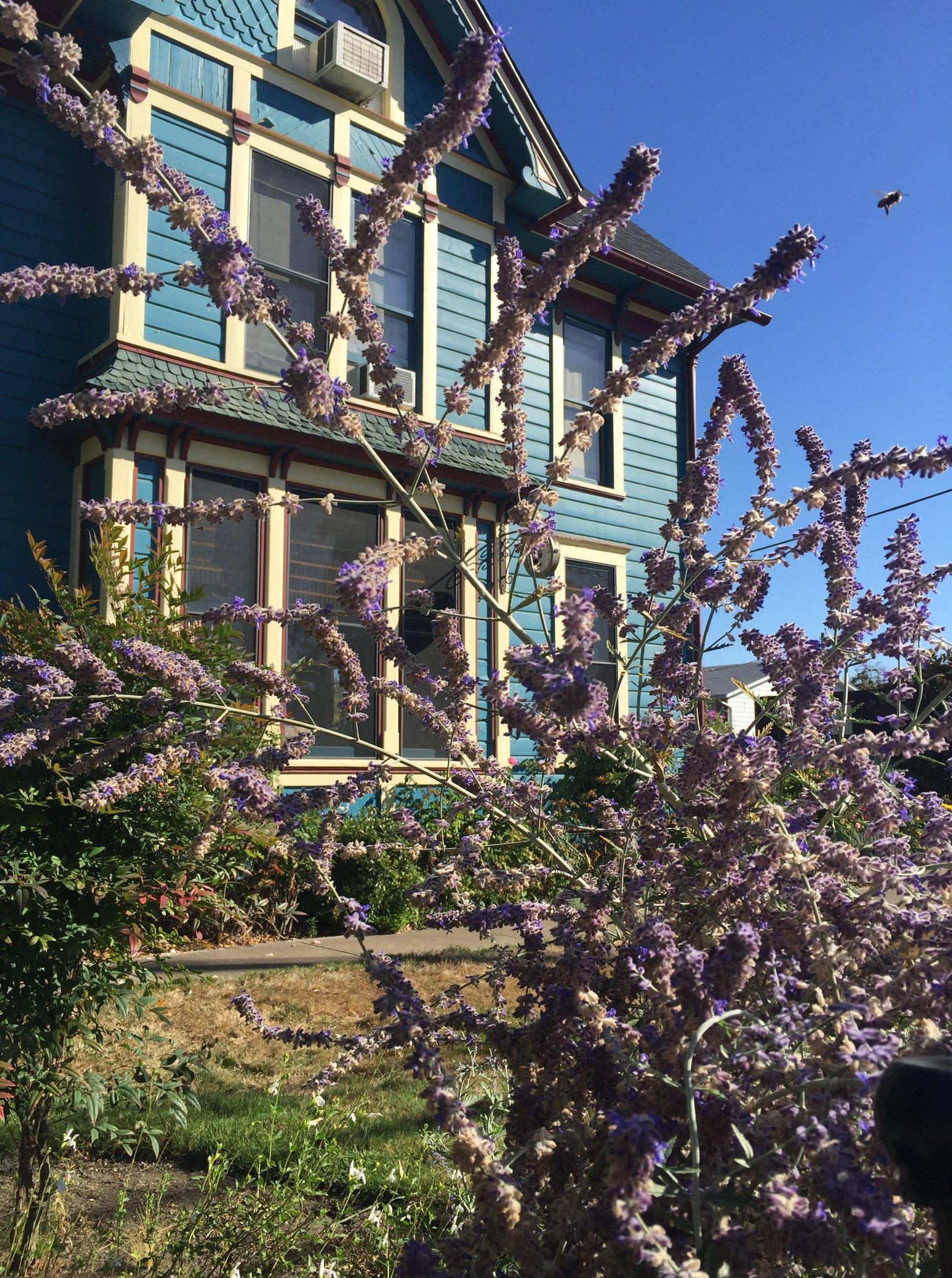 South View Lavender