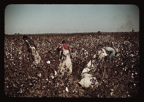 Day-laborers picking cotton near Clarksdale, M...