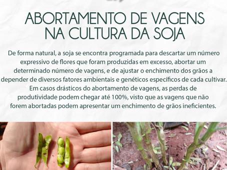 Abortamento de vagens na cultura da soja.