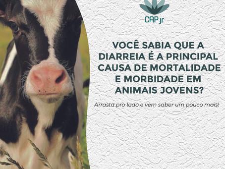 Você sabia que a diarreia é a principal causa de mortalidade e morbidade em animais jovens?