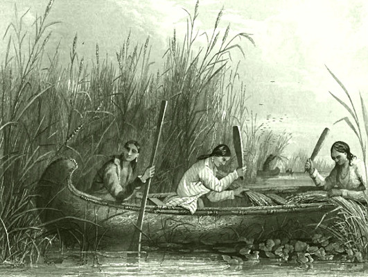 Wild_rice_harvesting_19th_century.jpg