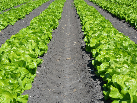 Getting started in farming: Is Farming the career for you?