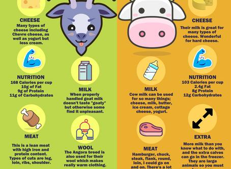 Goats vs. Cows