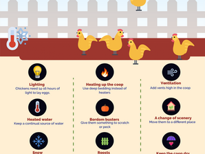 12 tips for keeping chickens in the winter