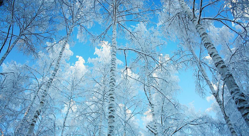 winter wonderland.jpg