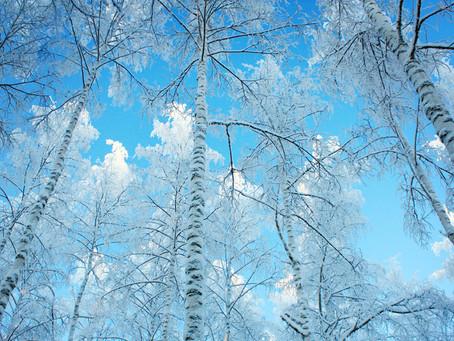 Optimal Winter Wellness:  Top 8 Tips to Boost Immunity!