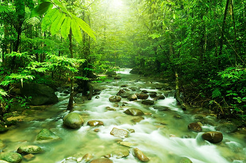 Tropical Rainforest with River.jpg