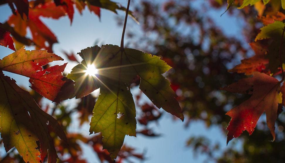 hello-fall-DN696LN.jpg