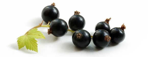 Ready washed Fruit - Black Currents