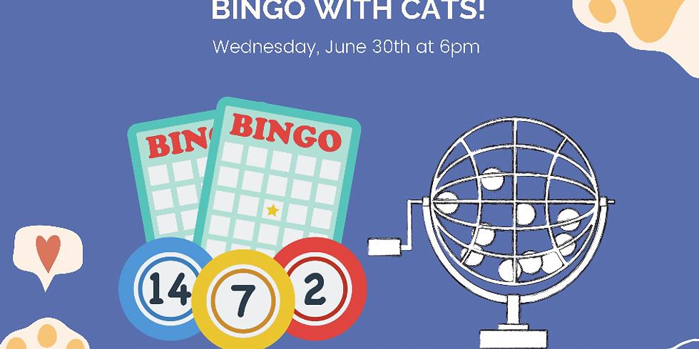 Bingo with Cats!