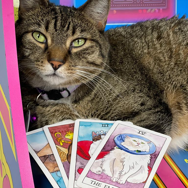 Cat Tarot Readings!