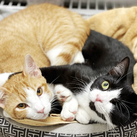 Bonded Pairs: They Belong Together