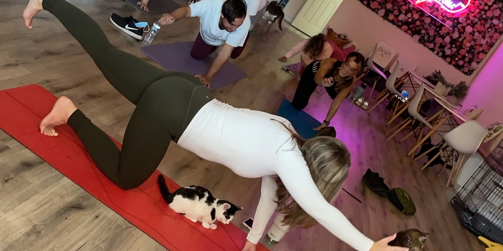 Yoga with Cats!