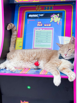 Jasper on arcade
