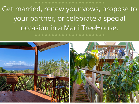 Propose-Elope-Celebrate at a Treehouse