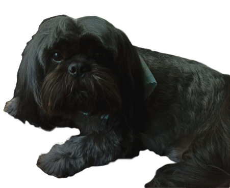 black%20puppy_edited.png