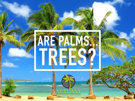 What's the difference? Palms vs Trees