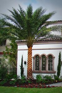 Sylvester Date Palm in Tuscan / Mediterranean Landscape Design