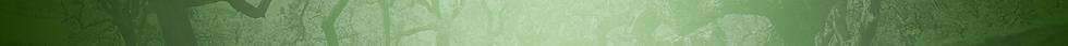 1920x85_home-stripBG.png