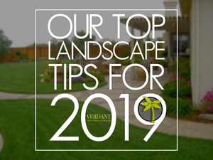 HOUSTON LANDSCAPE TIPS 2019