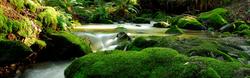Peter's Creek