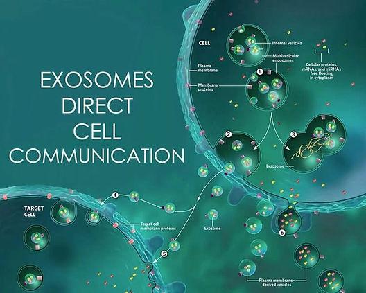 exosomes target cell communications.jpg