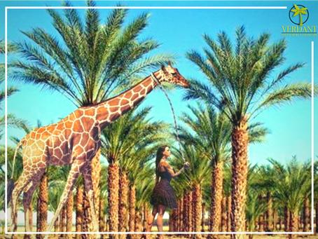 Palm Tree Prejudice – (we're fighting back! 😉)