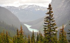 Forest above Lake Louise