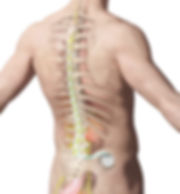 spinal-cord-stimulation.jpg