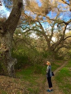 Coastal Oak Forest