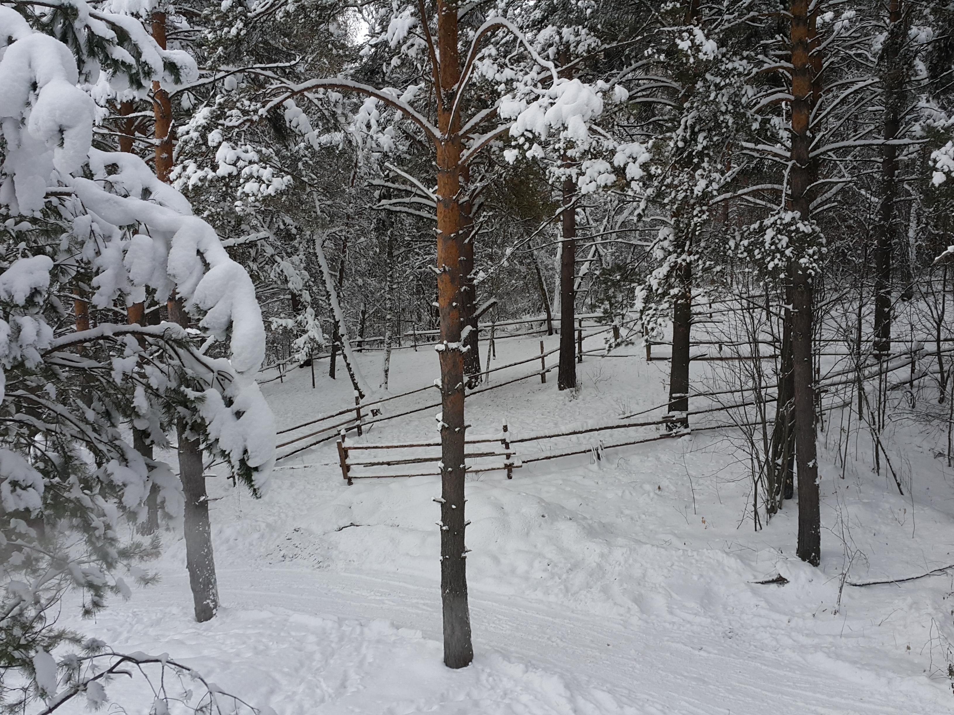 Снежные левады.