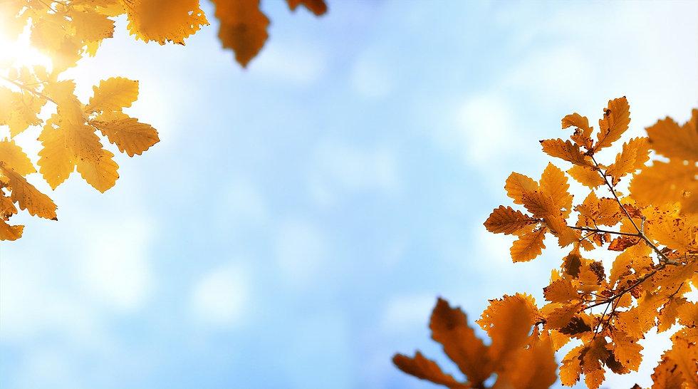 autumn-4034180_1920.jpg