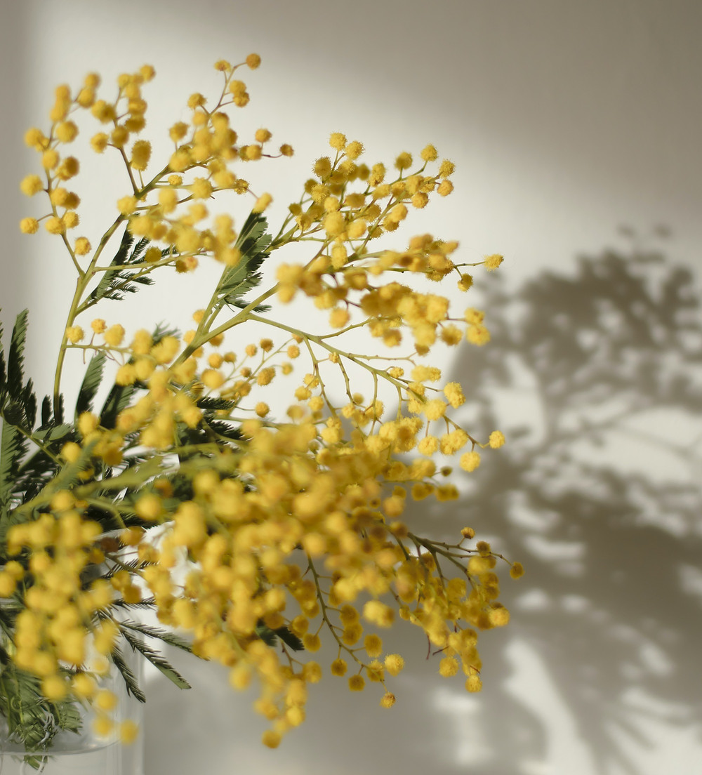 mimosa ombra carcere donne