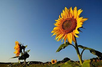 flower-1091528_960_720.jpg